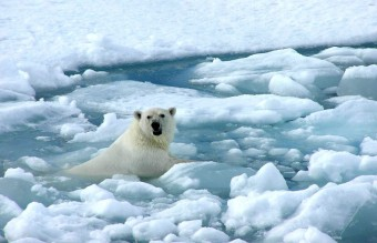 1379402361_arctic_sea_ice_polar_bear