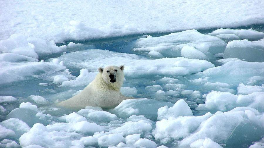 1379402361_arctic_sea_ice_polar_bear