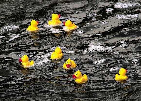 yampa_river_rubber_ducky_race