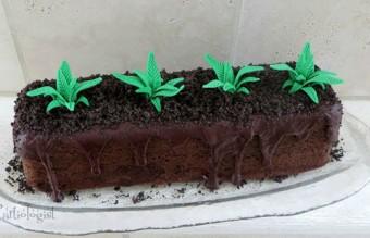torti (11)