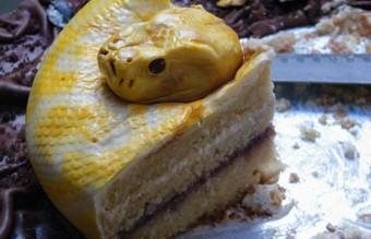 torti (8)