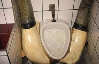 toilette_13