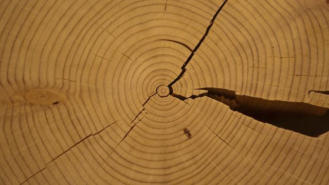 tree_rings1