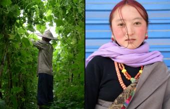 Fujian Farmer & Tibetan Youth