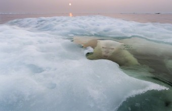 Polar-Bear-Photography14-640x426