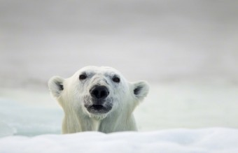 Polar-Bear-Photography4-640x426