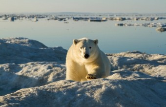 Polar-Bear-Photography5-640x426