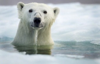 Polar-Bear-Photography8-640x426