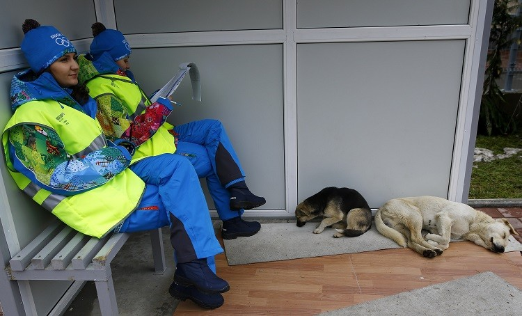 Volunteers sit near two stray dogs outside the Gorki media center where they will coordinate the media shuttles buses in Krasnaya Polyana