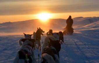 dog_sledge_in_sunset