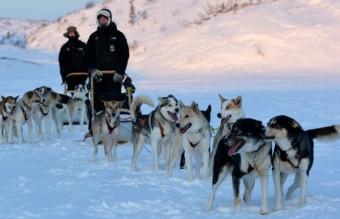 dog_sledges