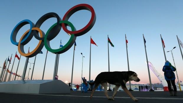 sochi-olympics-stray-dogs