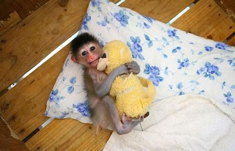 cute-animals-sleeping-stuffed-toys-24