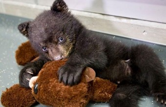 cute-animals-sleeping-stuffed-toys-39