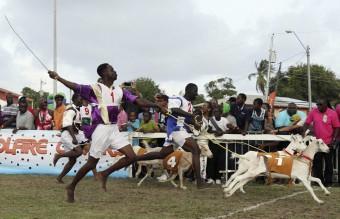 Jockey Samuel Cudjoe runs his goat Bright Spark over the finish line in Mount Pleasant