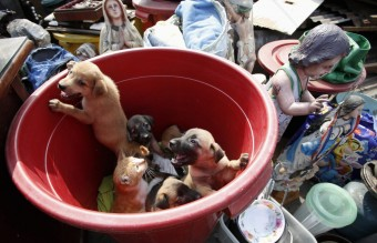 A slum dweller's pets, including puppies and a cat, look on from a plastic container next to religious statues and other belongings, after a squatter colony was demolished in Tondo, Manila