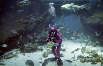 APTOPIX Singapore Underwater Easter Bunny