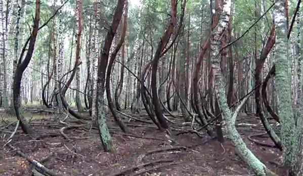 9forest-ryazan