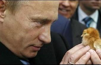 Poutine0051