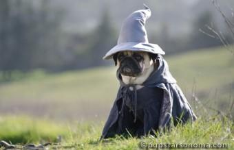 BooBoo The Grey (Gandalf)