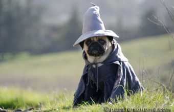 BooBoo The Grey (Gandalf)2