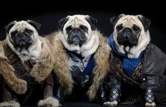 Fili, Thorin and Kili
