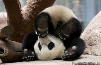 funny-animals-doing-yoga-10