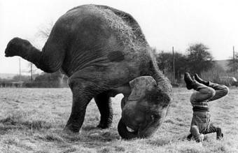 funny-animals-doing-yoga-13