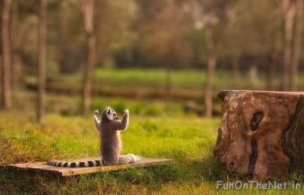 funny-animals-doing-yoga-14