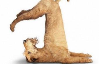 funny-animals-doing-yoga-17