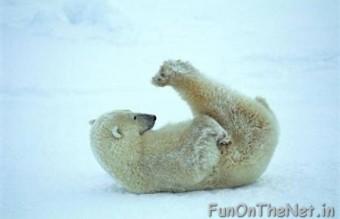 funny-animals-doing-yoga-18