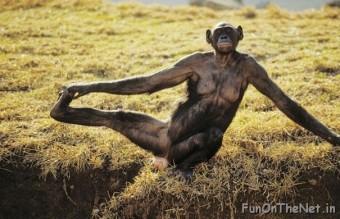 funny-animals-doing-yoga-19