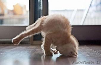 funny-animals-doing-yoga-2