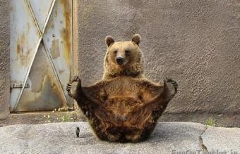 funny-animals-doing-yoga-6