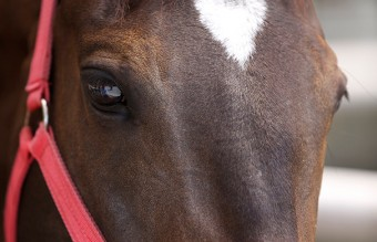 unusual-animal-markings-60