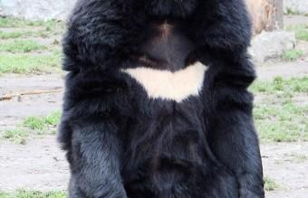 unusual-animal-markings-67