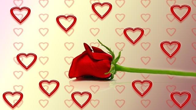 rose-260821_640