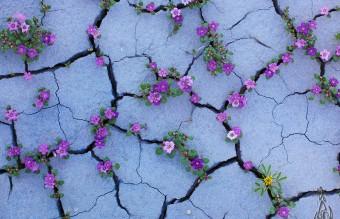 flower-tree-growing-concrete-pavement-102