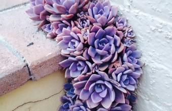 flower-tree-growing-concrete-pavement-17
