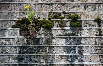 flower-tree-growing-concrete-pavement-22