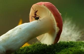 mushroom-photography-vyacheslav-mishchenko-12