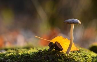 mushroom-photography-vyacheslav-mishchenko-17