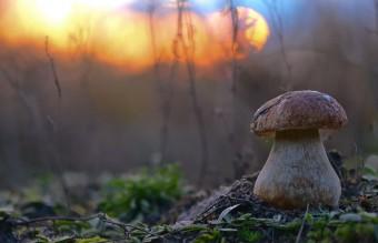 mushroom-photography-vyacheslav-mishchenko-21