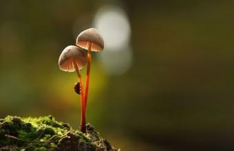 mushroom-photography-vyacheslav-mishchenko-4
