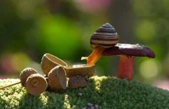 mushroom-photography-vyacheslav-mishchenko-7