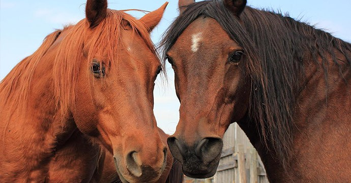 two-horses-jim-sauchyn