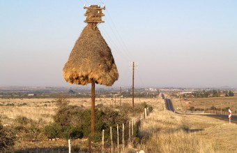 animal-architecture-nests-1-1