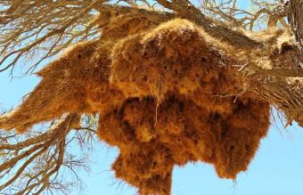 animal-architecture-nests-1-3