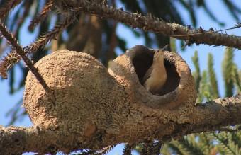 animal-architecture-nests-2-2