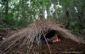 animal-architecture-nests-4-1